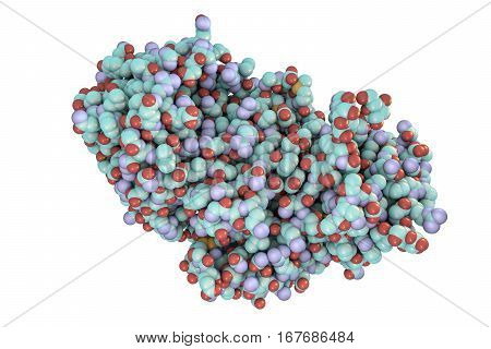 Molecule of ricin isolated on white background, 3D illustration, a highly toxic protein produced in seeds of castor oil plant Ricinus communis