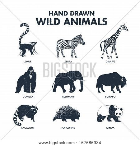 Hand drawn textured wild animals icons set with lemur zebra giraffe gorilla elephant buffalo raccoon porcupine and panda vector illustrations.