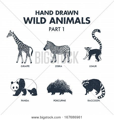 Hand drawn textured wild animals icons set with giraffe zebra lemur panda porcupine and raccoon vector illustrations.