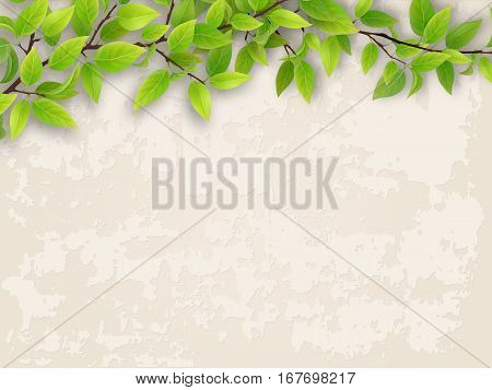 Tree branch with green foliage on old plastered wall background.