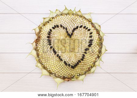 Sunflower head. Heart shape made from the seeds.