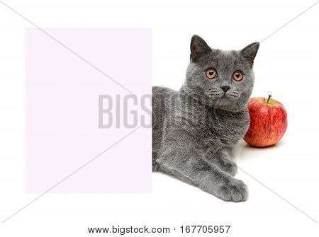 gray cat and a red apple over a banner on a white background. horizontal photo.