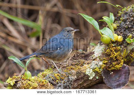 The bird seek a food on the stump