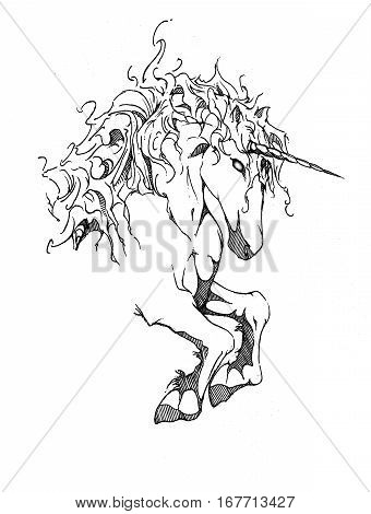 drawing of a unicorn head and flowing mane