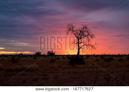 A lone tree is silhouetted against a vibrant sunset in the Australian outback - Pilbara region of Western Australia, Australia.