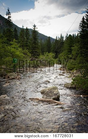 Brook flowing from the sea eye in the Tatras