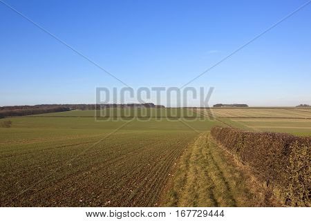 Yorkshire Wolds Crops