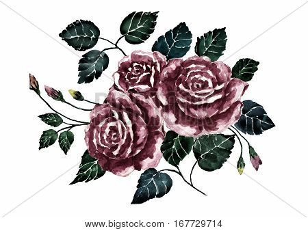 Watercolor drama rose.Dark bouquet flower.Hand painted art.Isolate on white background.Illustration of feeling concept