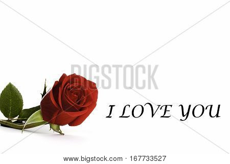 Red rose with the words I Love You making a simple lover's calling card image. Space for additional text or photographs or use as a simple gift or calling card.