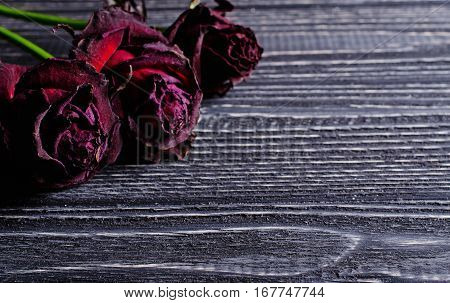 Three beautiful dry roses against an aged wooden background (retro toned vintage style) with copy space for your text