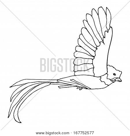 Quetzal Bird flying. Vector resplendent Quetzal. Hand drawn monochrome illustration.