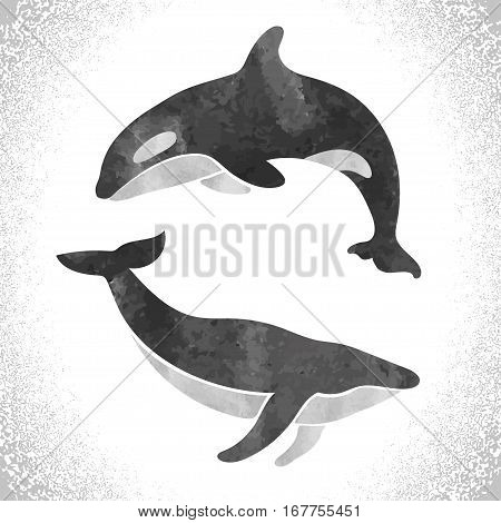 Killer whale and fin whale isolated on white. Vector set.