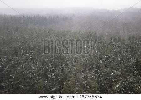 Heavy snowfall blizzard in the forest. Bad weater winter