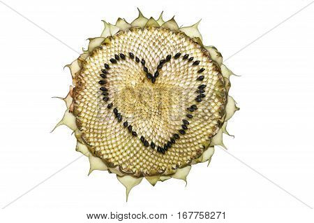 Sunflower head isolated on a white background. Heart shape made from the seeds.
