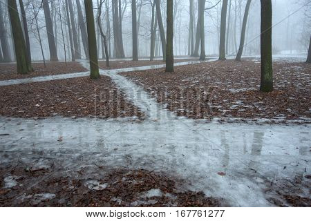 Foggy winter morning in the park. On the ground, there are overlapping ice track.