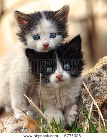 Two small scared kittens looking at the camera, clinging to each other