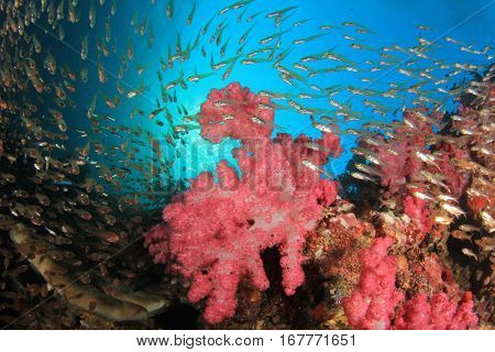 Red soft coral and fish