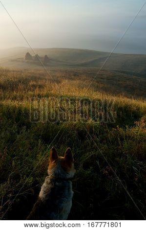 Dog in a field. Beautiful sunrise in russian village.