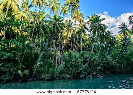Jungle river on Cebu Island in Philippines