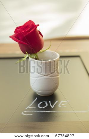 One Red Rose in a cup for Mother's Day or Valentine's as a loving gift