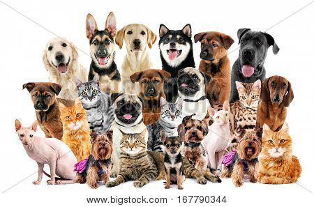 Group of cute pets on white background