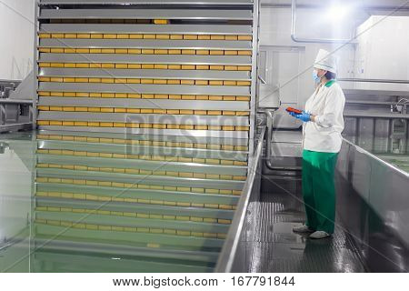 SHUCHIN BELARUS - JANUARY 26 2015. The woman controls the production line at the cheese factory.