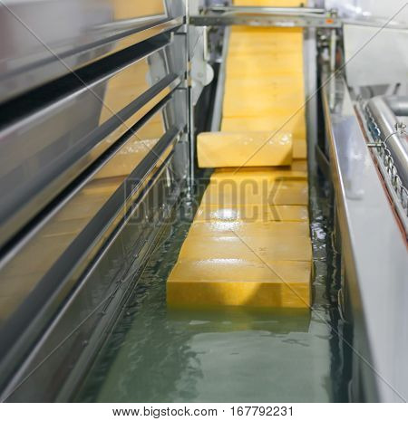 Yellow cheese production line for cheese factory.