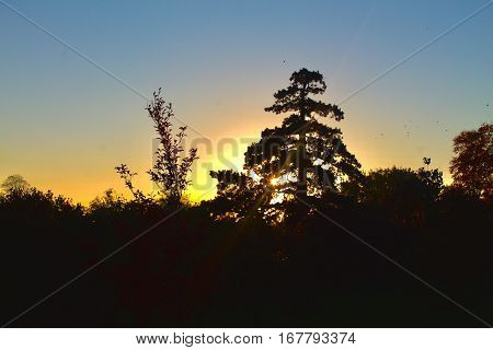 A silhouette of a tree and some shrubbery in front of a golden sunset and clear sky.