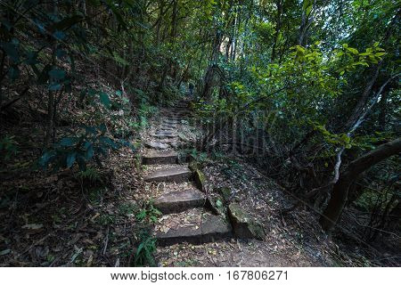 Forest Track, Hiking Path With Wooden Stairs