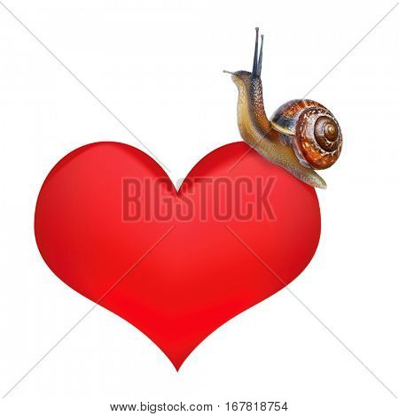 Snail on heart isolated white background
