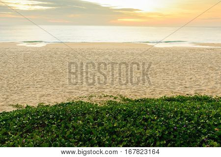 background and texture of sand pattern on a beach and green grass in summer