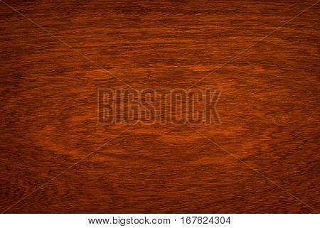 Macro Ormosia wood texture Afzelia xylocarpa (Kurz) Craib LEGUMINOSAE-CAESALPINIOIDEAE (FABACEAE)