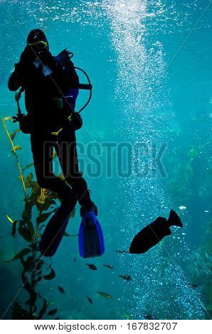 An Aquarium Scuba Diver in Monterey California