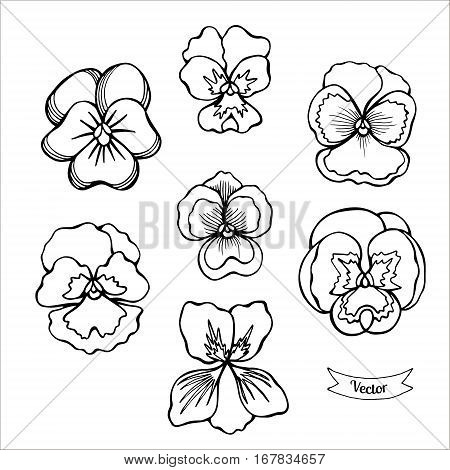 Pansy flower vector set. Various of viola black linear illustration isolated on white.