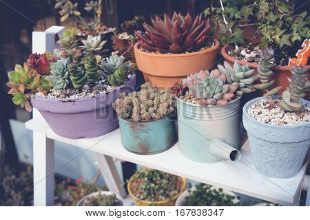 agave succulent plant pots selective focus toning