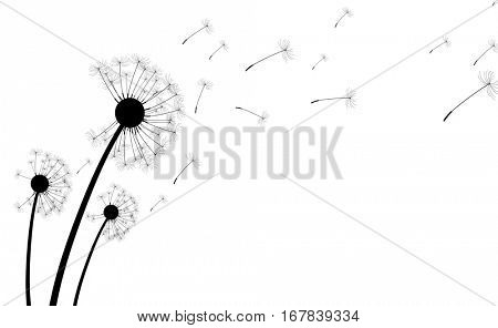 White background with silhouettes of dandelions. Vector paper illustration.