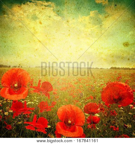 Photo of a poppies flowers on a grunge background