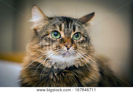 portrait of green eyes funny cat