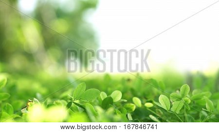 Green Lush Plant Field With Blur Bokeh And Half White Copy Space