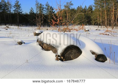 wooden log under snow on forest meadow