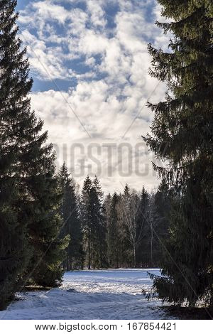 winter landscape of the forest park with a snow glade and the cloudy sky