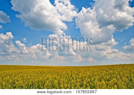 Ukraine landscape in spring beautifully sunny day
