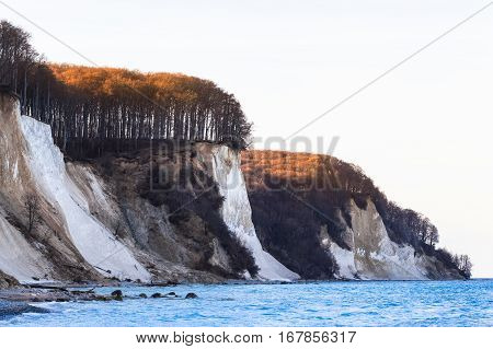 Chalk coast of Rügen Island (Germany) at Baltic Sea in snowless winter, covered by trees