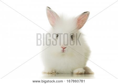adorable white bunny rabbit isolated on white background