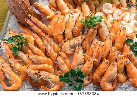 Freshly cooked prawns - shrimp on ice
