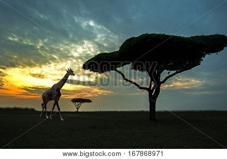 Silhouette of African safari scene with animals
