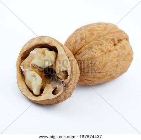 sturdy walnut isolated on the white background