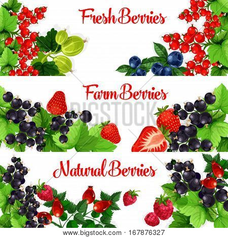Berries banners. Vector set of fresh garden berries of sweet and juicy strawberry, cherry, raspberry and blackberry, forest blueberry, black currant or redcurrant, gooseberry and briar berry fruit harvest design for fruit jam, market or store