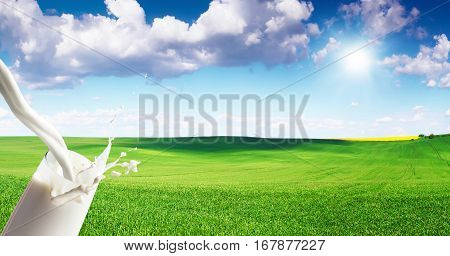Close up of milk splash on meadow background. White milk pouring into a glass on blue sky backdrop. Beautiful food theme. Free space for text on blue sky background.