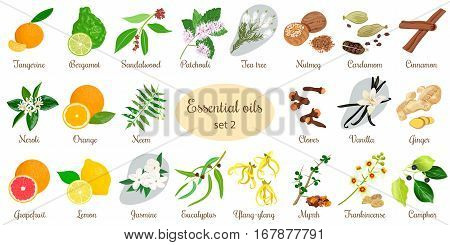 Big vector set of essential oil plants. Ylang-ylang, eucalyptus, jasmine, tea tree, bergamot, sandalwood, patchouli etc. For cosmetics, store, spa, health care, aromatherapy, homeopathy, Ayurveda